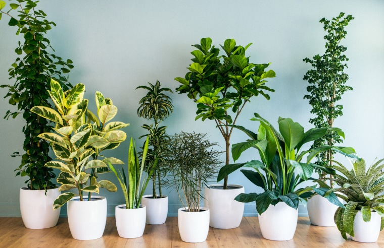 house-plants-decor-grouping-0213