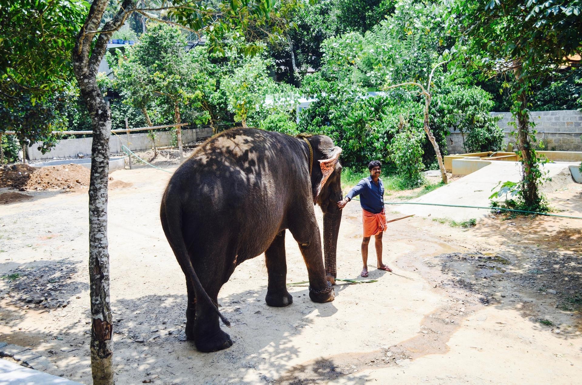 Elephant and Mahavat