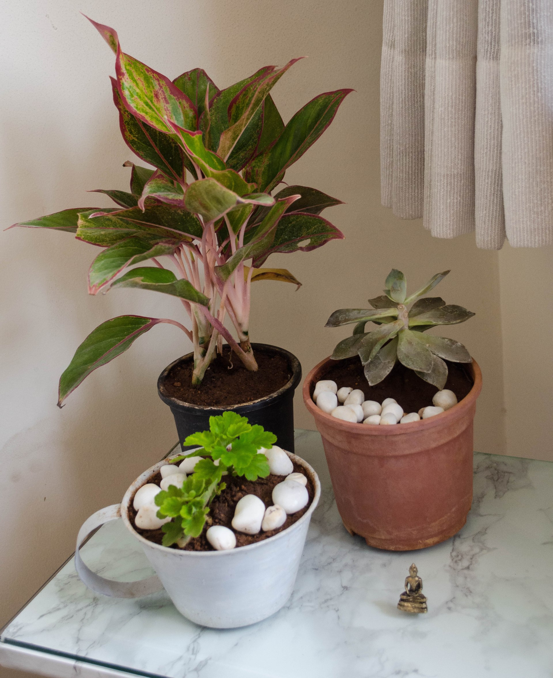Indoor Plants & Decor