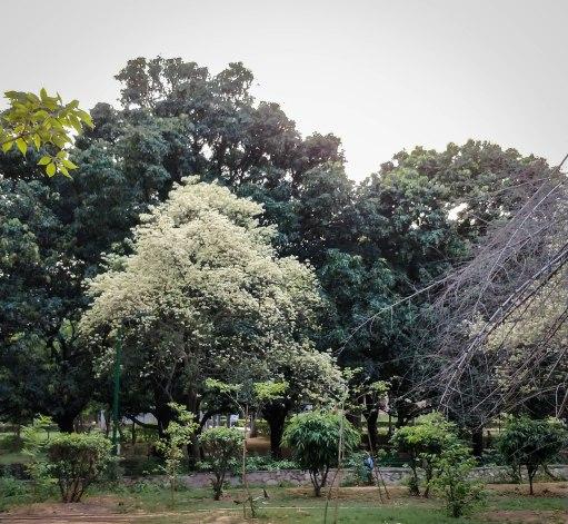 Lodhi Gardens, Delhi
