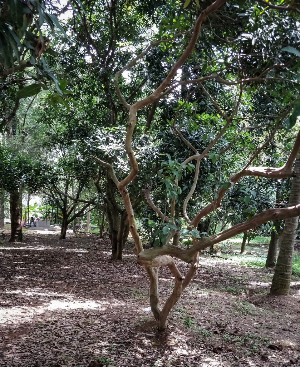 A Weekend in Bangalore