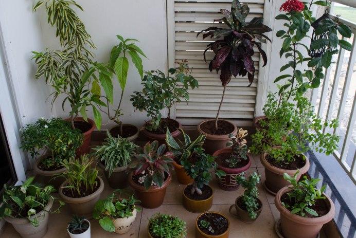 Plants SoulStrokes